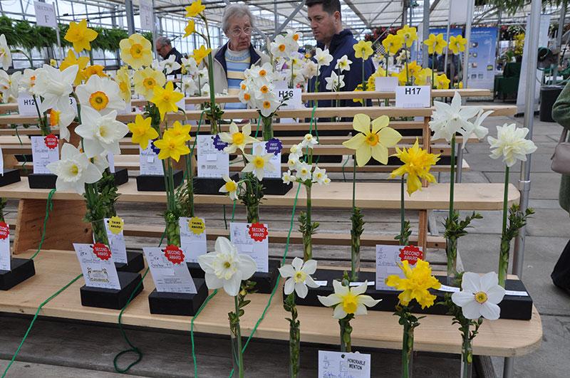 Daffodil Festival 2019 | Nantucket, MA