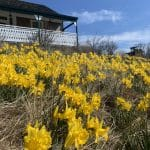 2021 Daffodil Photography Winner